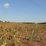 Drought Predicted to Increase Food Prices ~ Strategies To Save Money Now