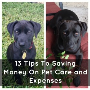Saving Money on pet care